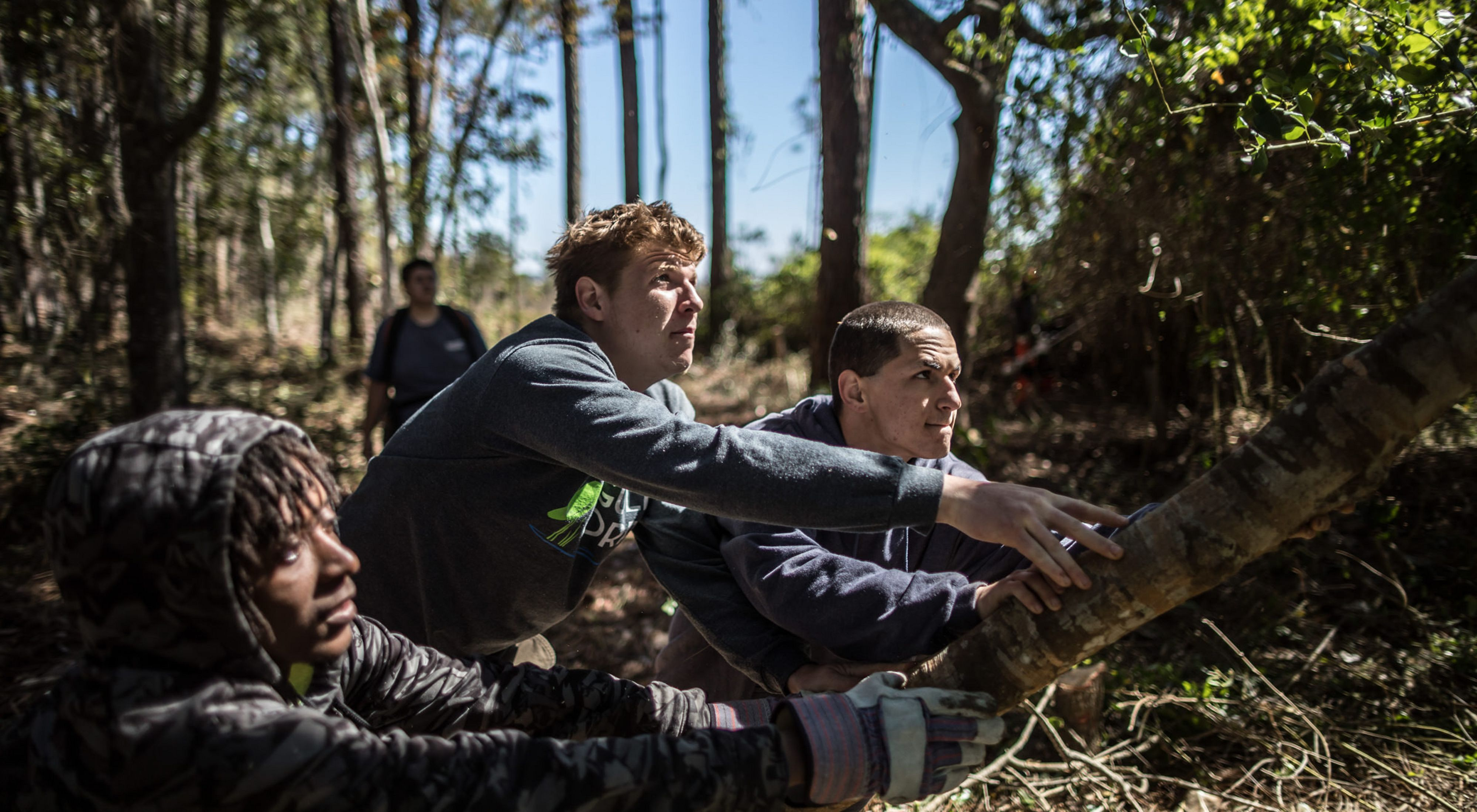 Three young men push down a cut tree to help restore habitat.