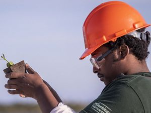 A Conservation Corps member prepares to plant a mangrove on Shamrock Island in Texas.