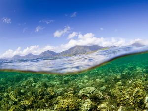Blanketed by invasive algae is seen in the foreground with surrounding mountains, Kaneohe Bay, Oíahu, Hawai'i.