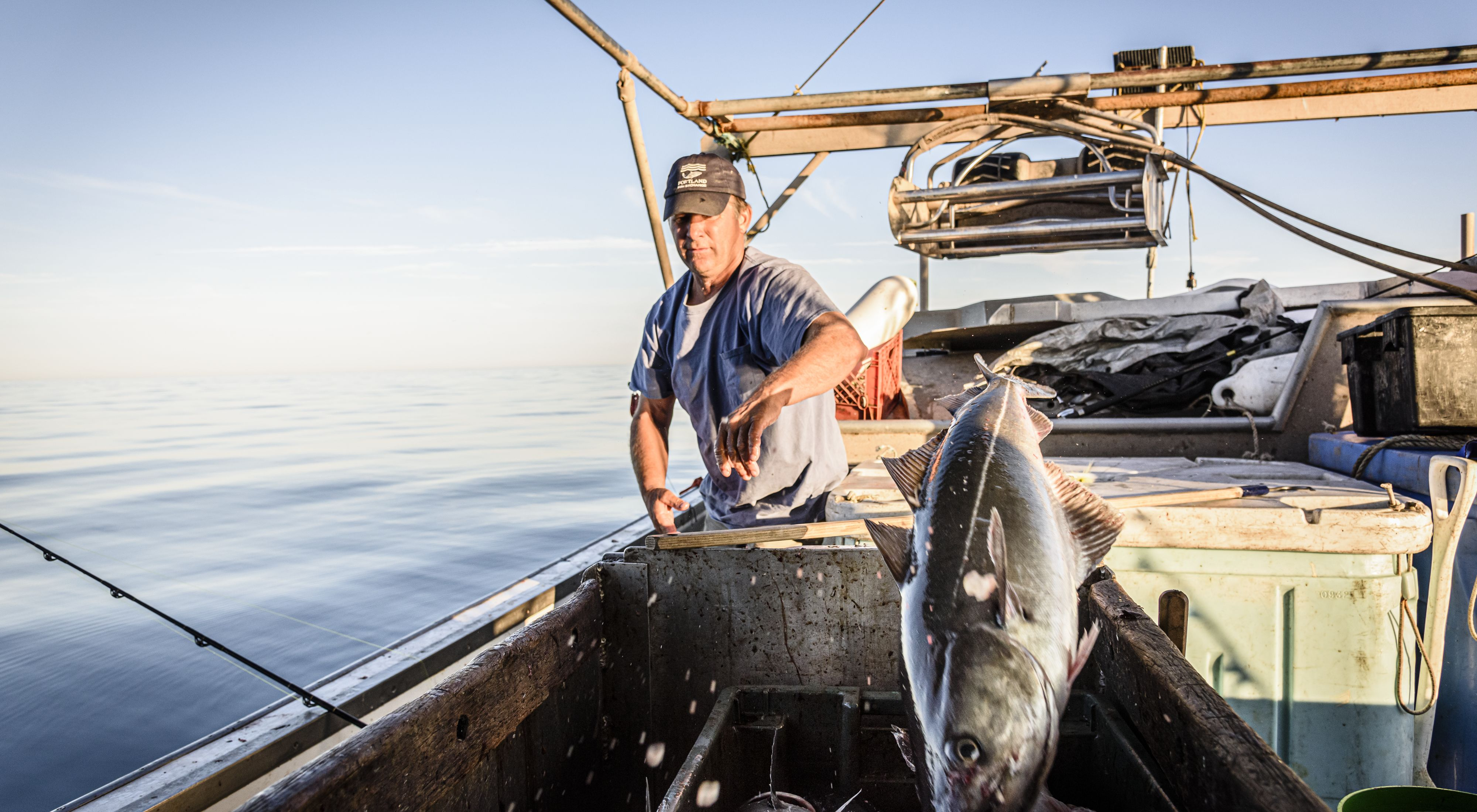 Bryan Bichrest throws a pollack into a fish bin on board his boat.