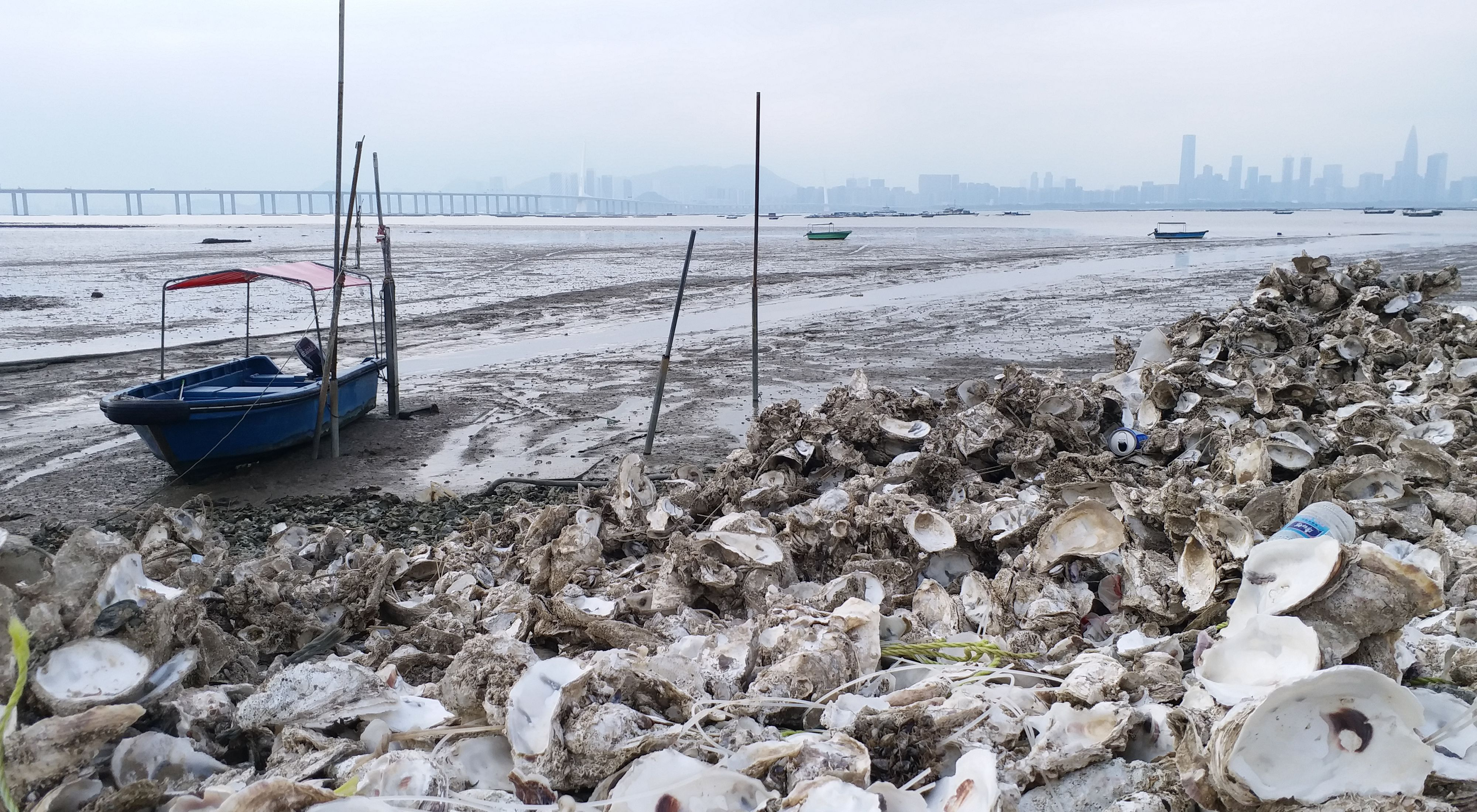 A small boat sits in mud near the shore that is lined with discarded oyster shells.