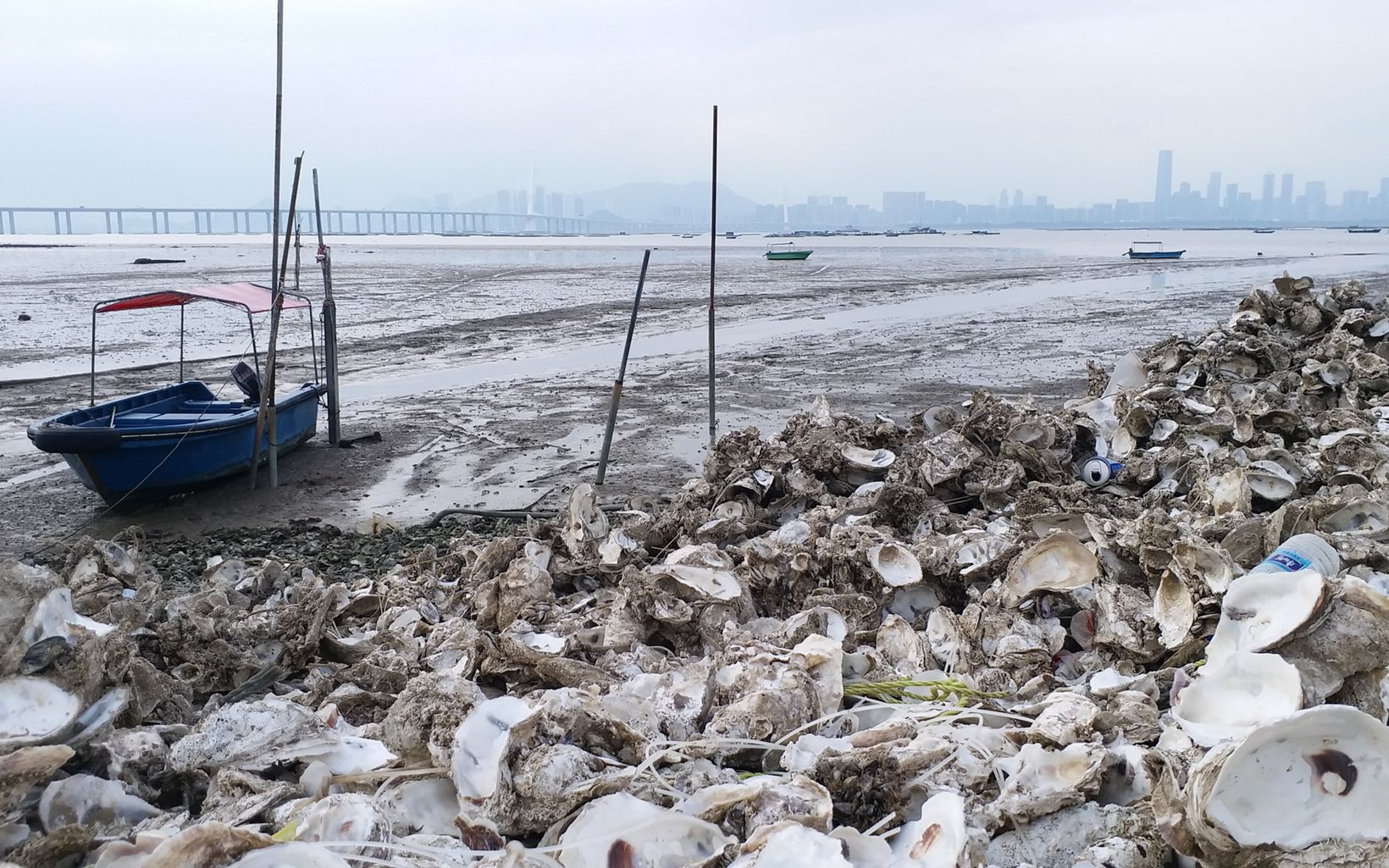 Oyster shells are discarded along the shoreline near Deep Bay.