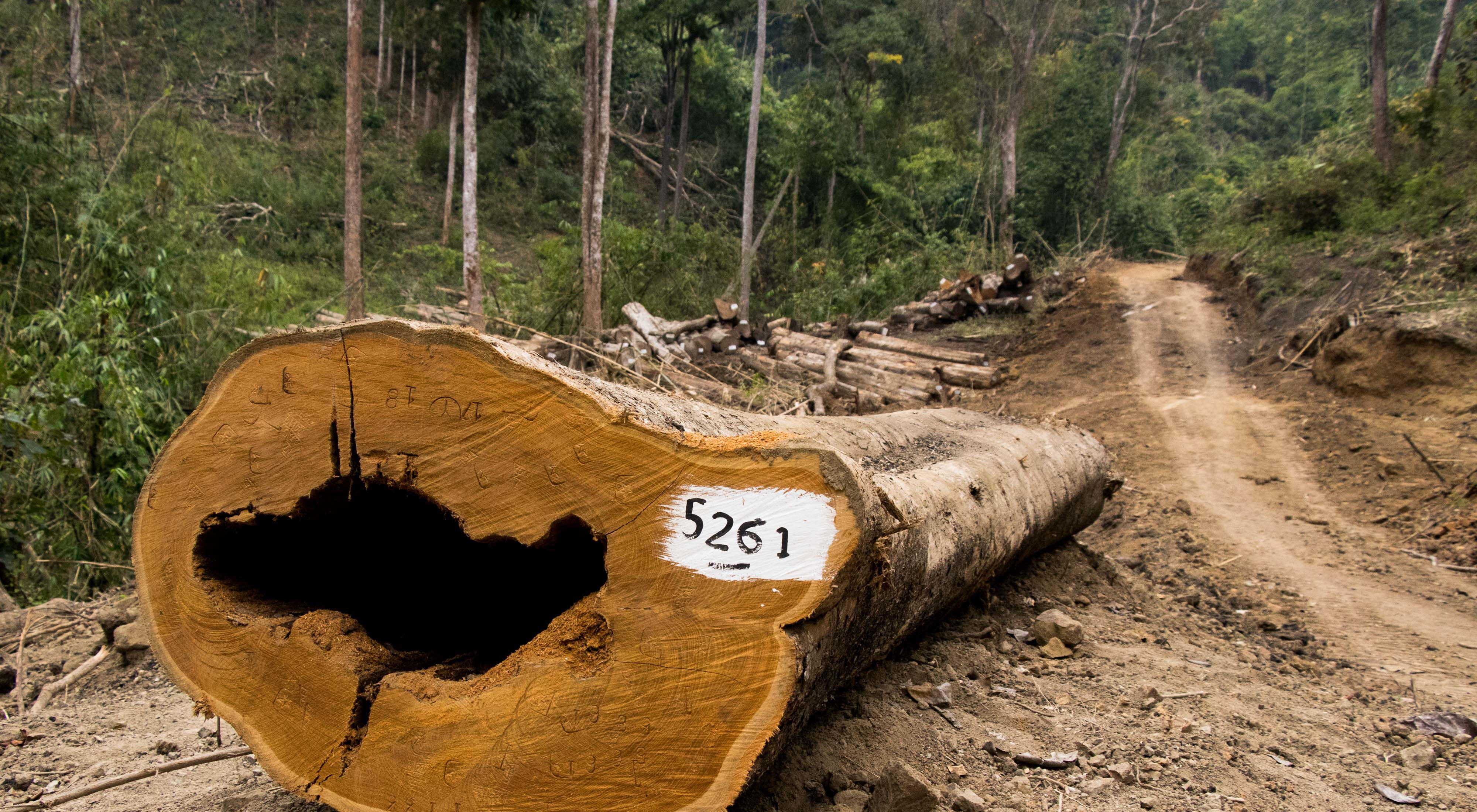has the third-highest deforestation rate in the world.