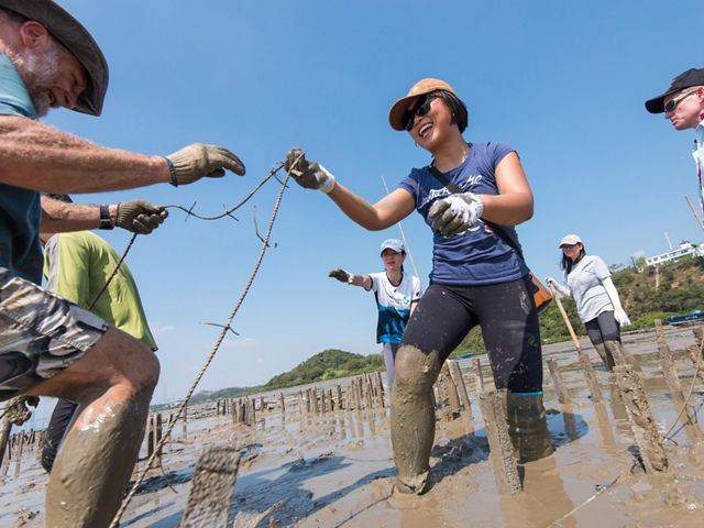A group of people stand in shallow water and mud tying rope to short posts building an oyster reef.