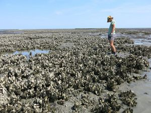 A woman stands in shallow water amongst a large cluster