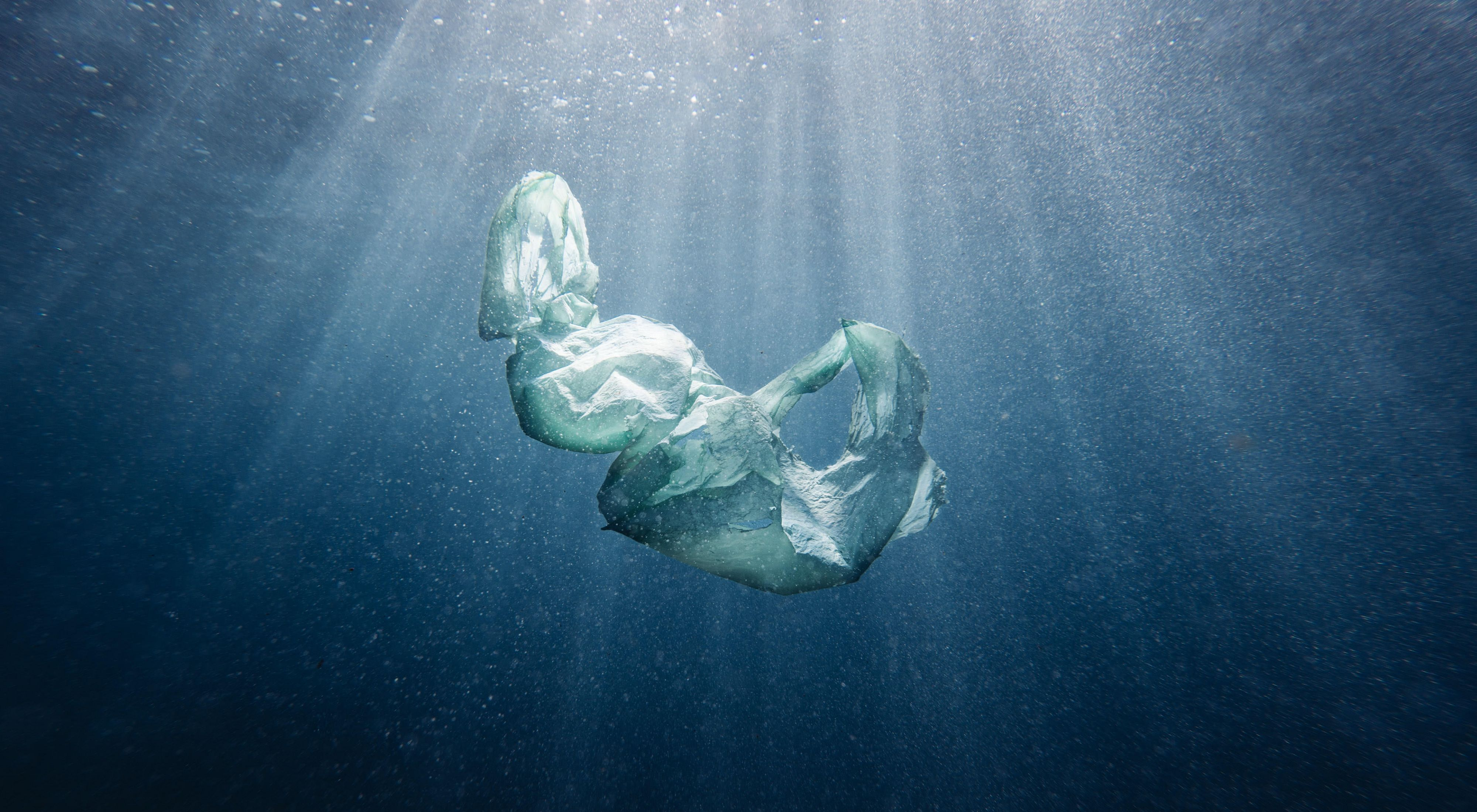 A plastic bag floats in water.