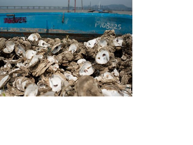 A large pile of oyster shells in front of a blue boat.
