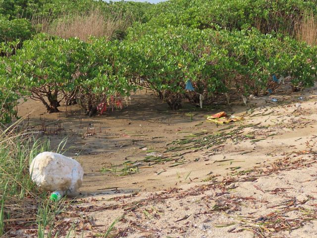 Trash is strewn across the sand and caught in between mangroves.