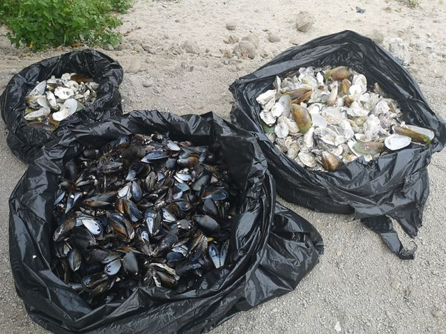 Recycled oyster shells and mussel shells are in different bags.
