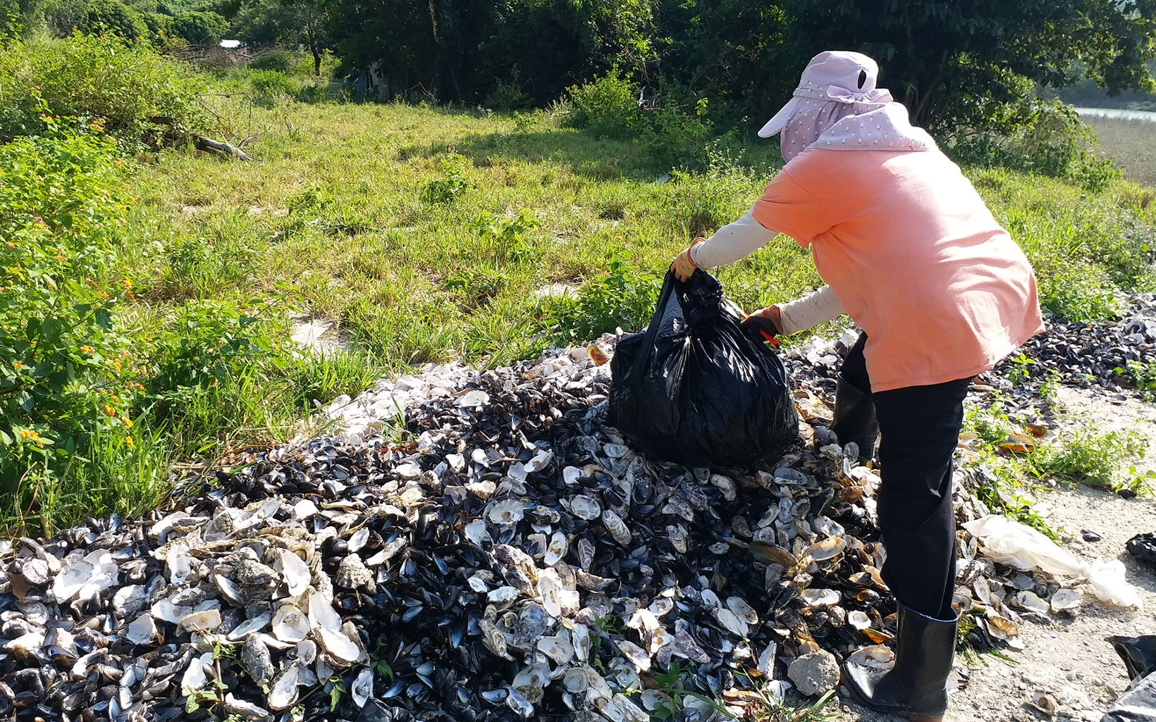 A woman empties a bag of oyster shells onto a pile.