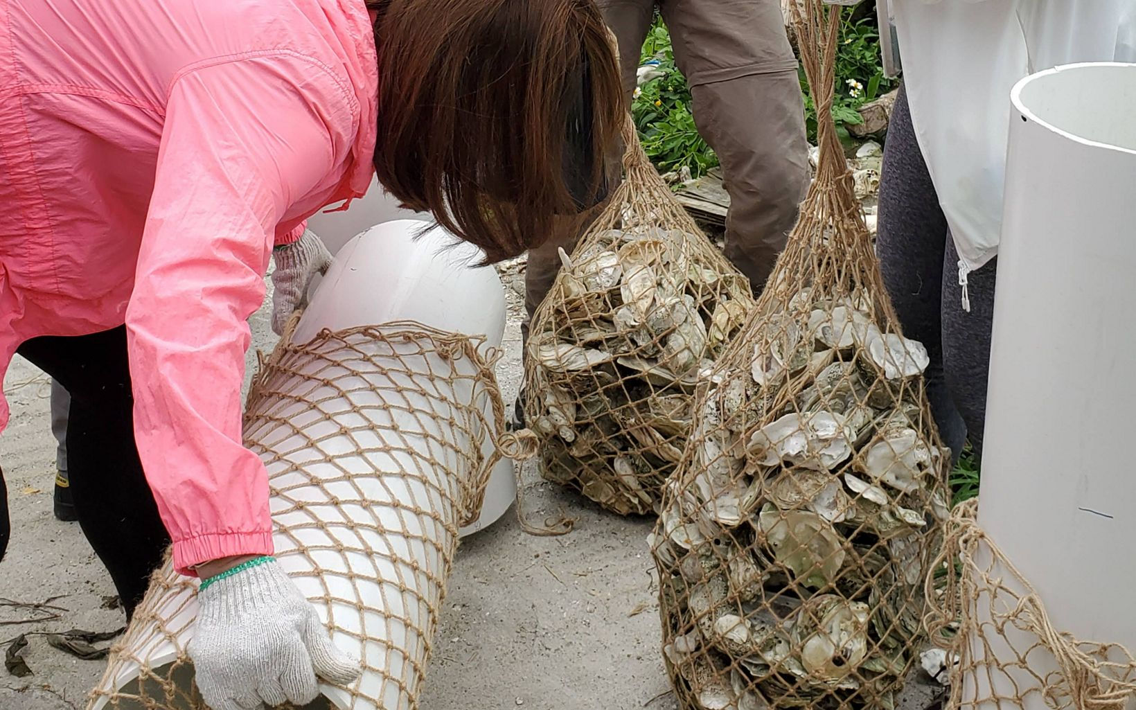 A group of people are putting oyster shells into rope bags.
