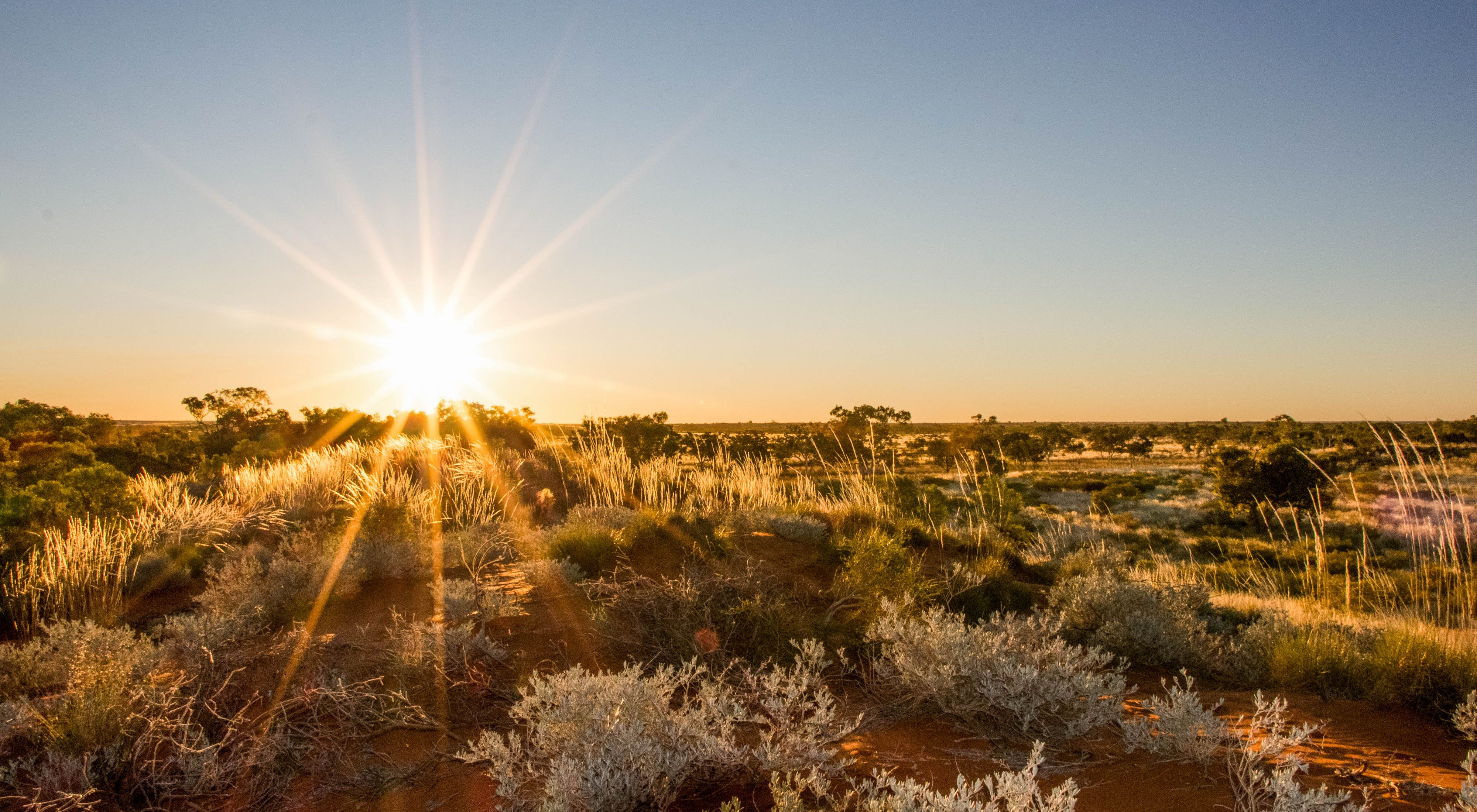 over the sand dunes on Martu country, Western Australia.