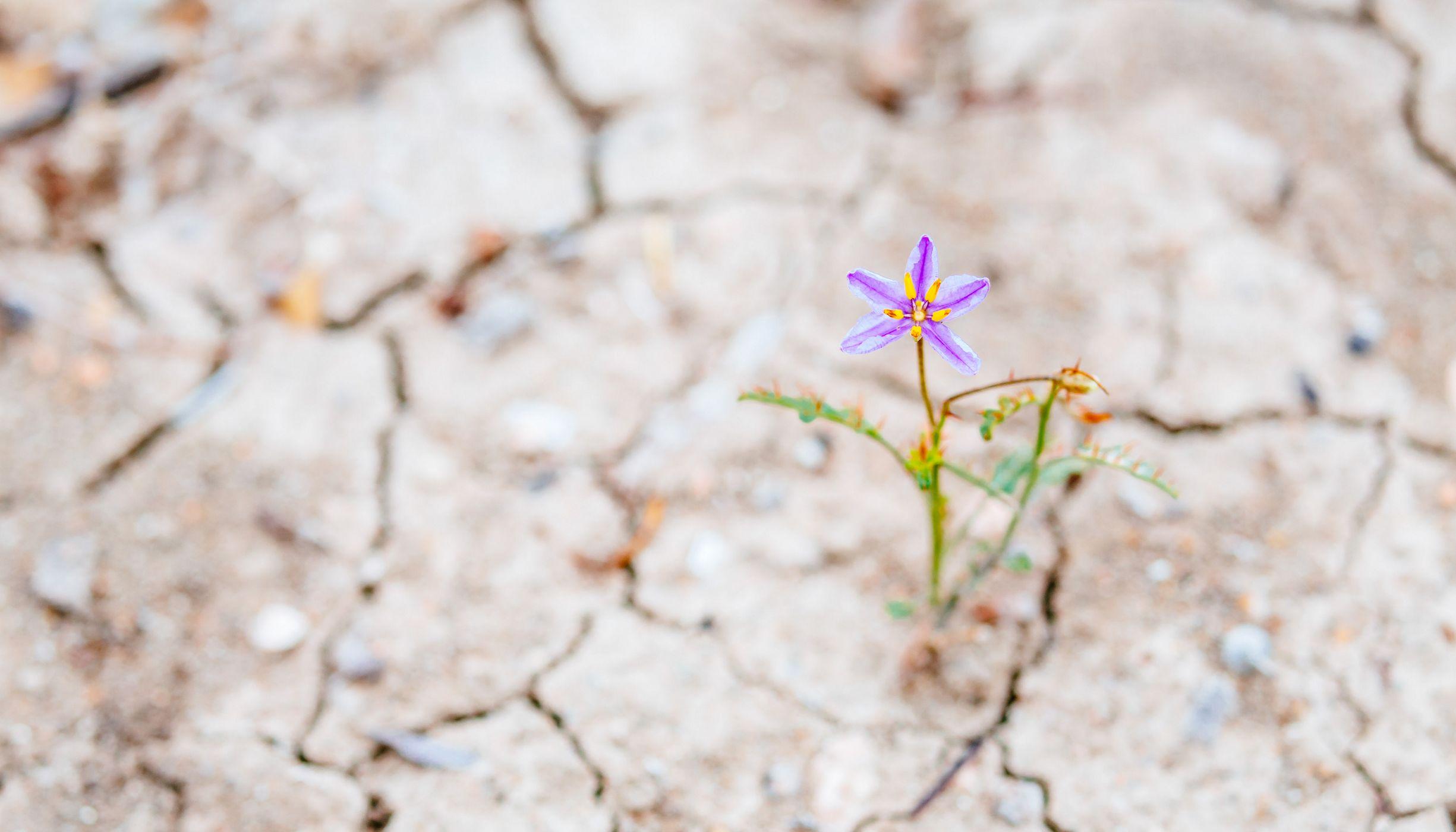 Debemos restaurar la naturaleza esta década: aquí va cómo hacerlo