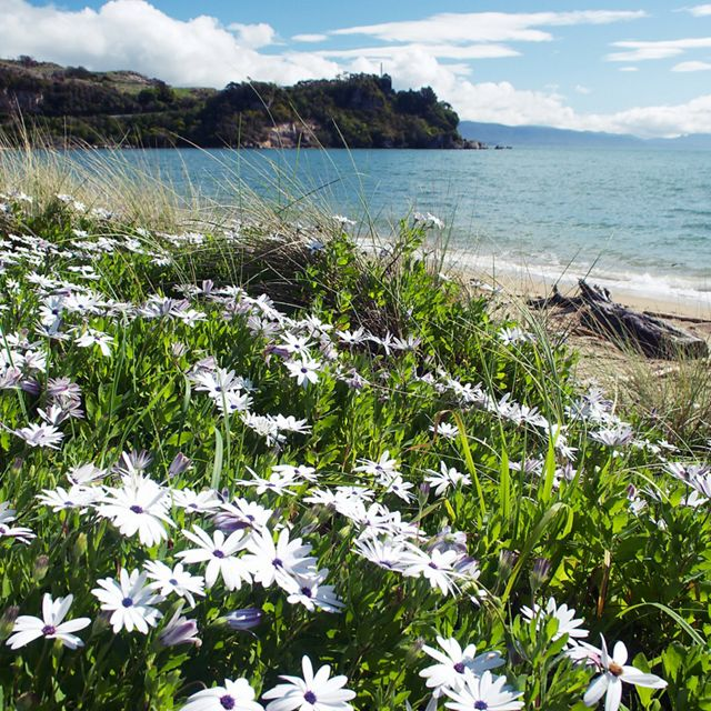 A bay with daisies in the foreground.