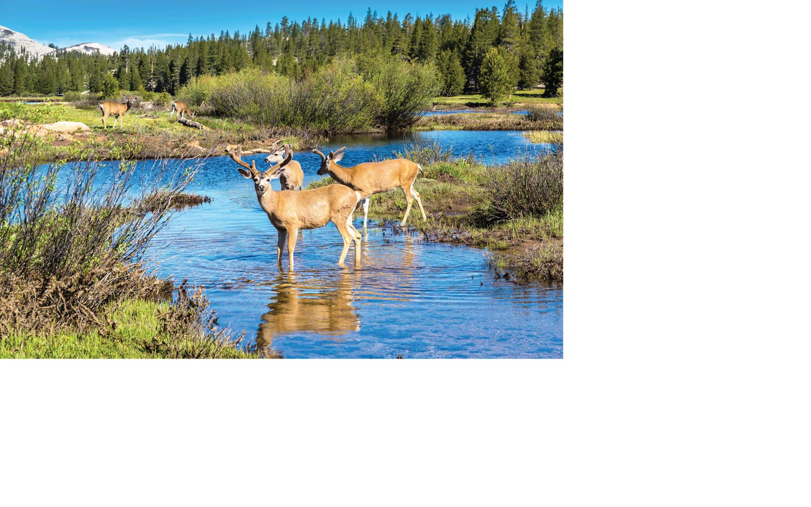 The work of the Rio Grande Water Fund is improving habitat for wildlife.