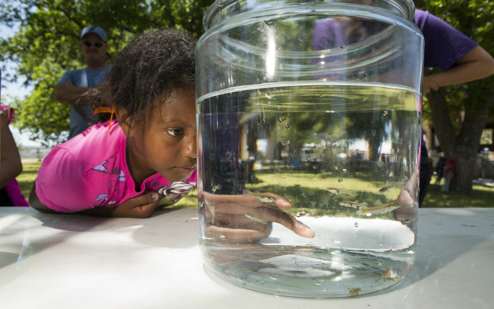 A girl leans in close to look at tiny fish in a jar of water.