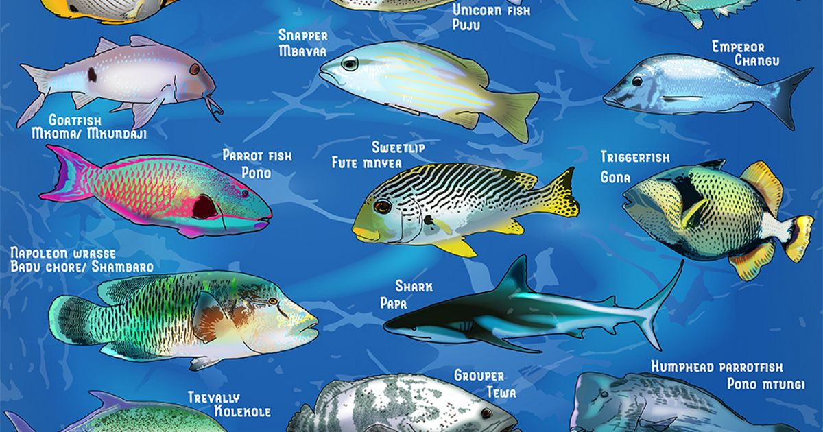 Illustrations of fish from Coral Reef Monitoring in East Africa: A Guide for Communities