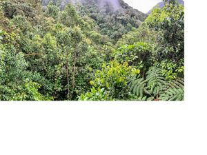A mid-elevation forest in the Western Andes in Ecuador. Prime wintering grounds for several species of Vermont birds.