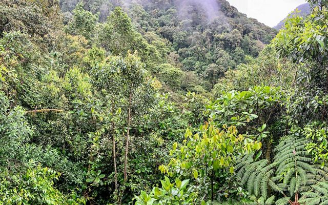 Andean Montane Forest