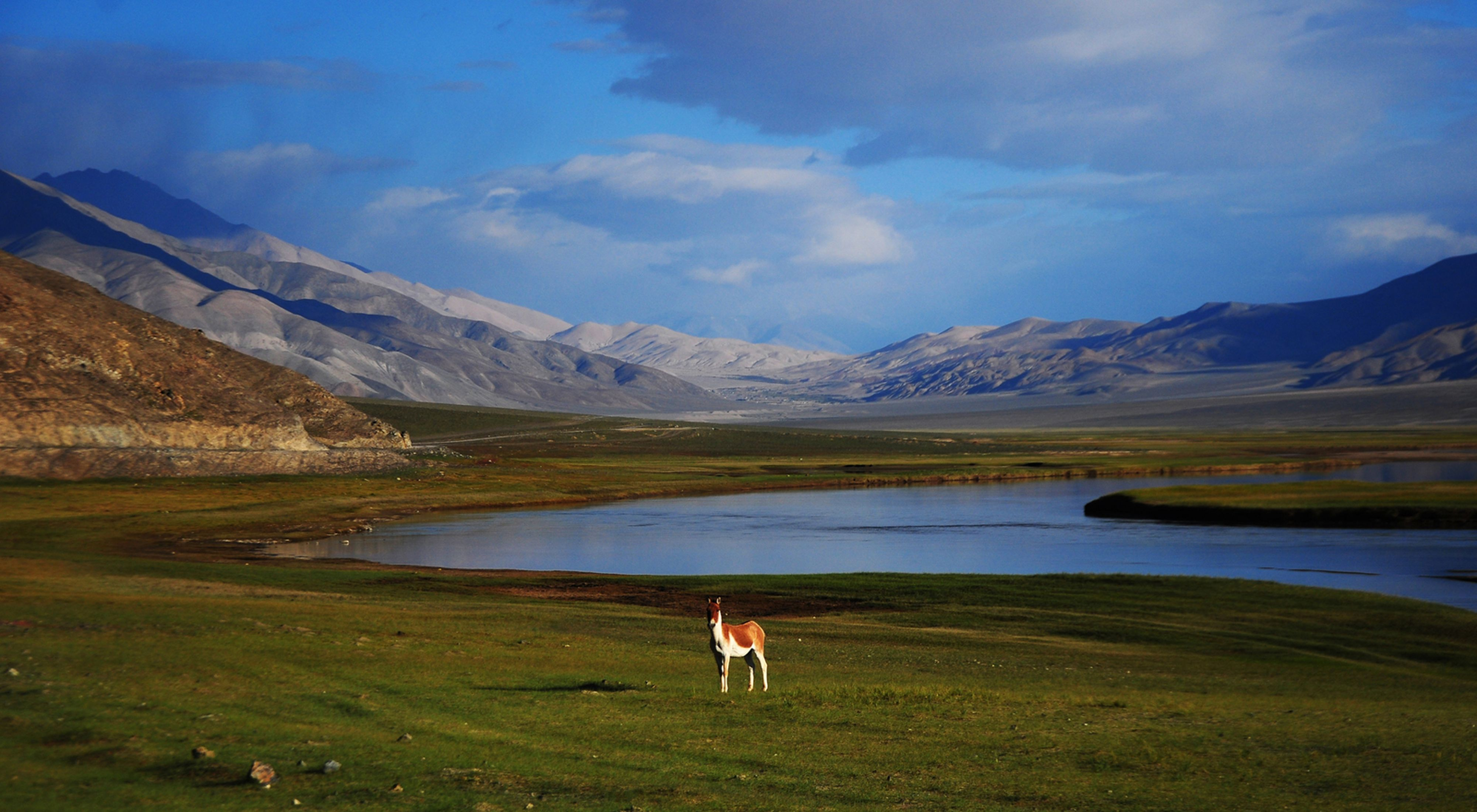 Kiang in front of lake and mountains in background