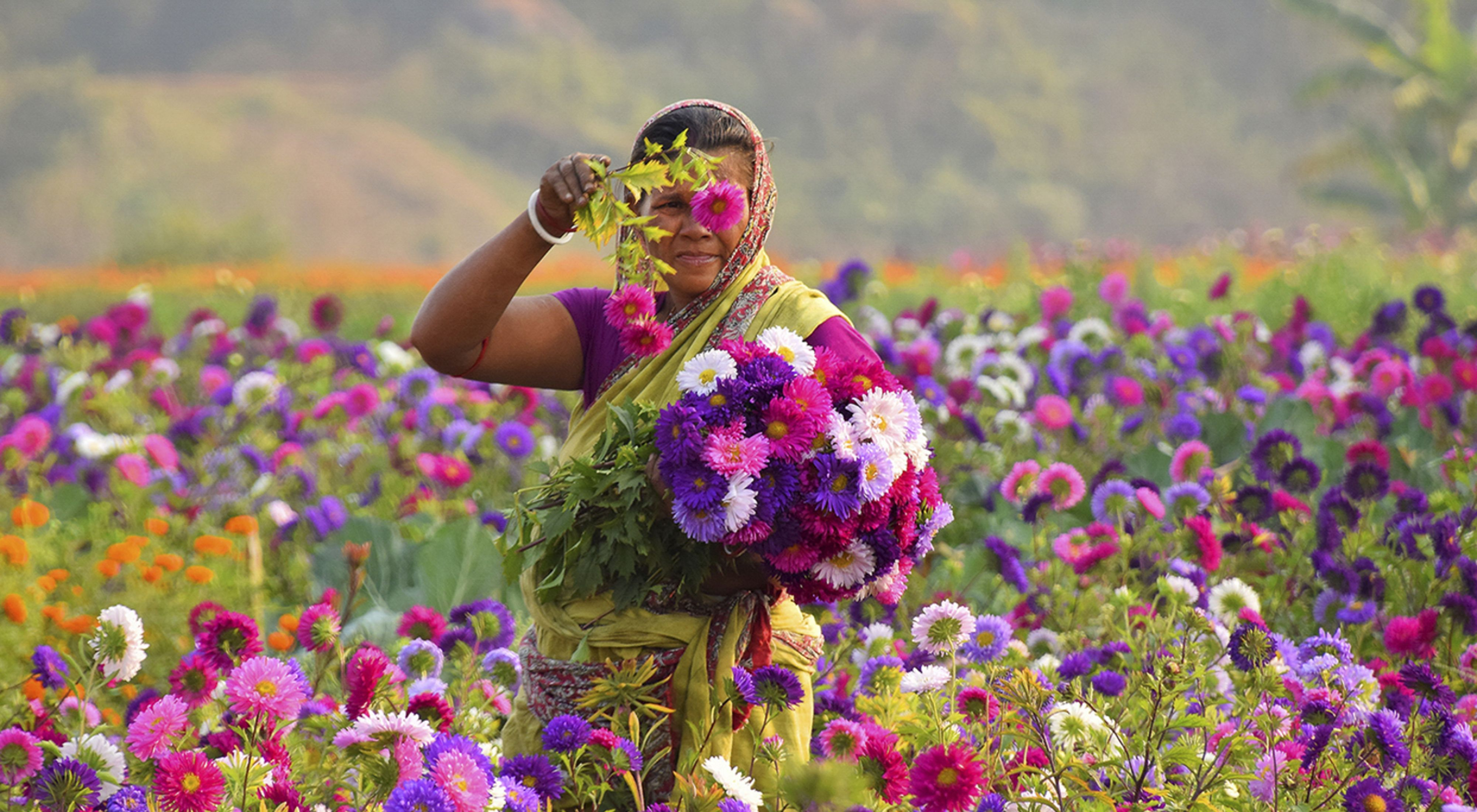A woman working at a flower field. Khirai, West Bengal, India.