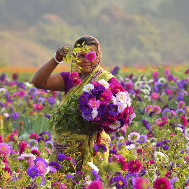 A woman working at a flower field