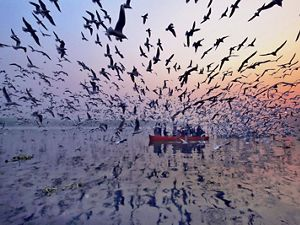 Large flock of birds, small red boat on river at sunset
