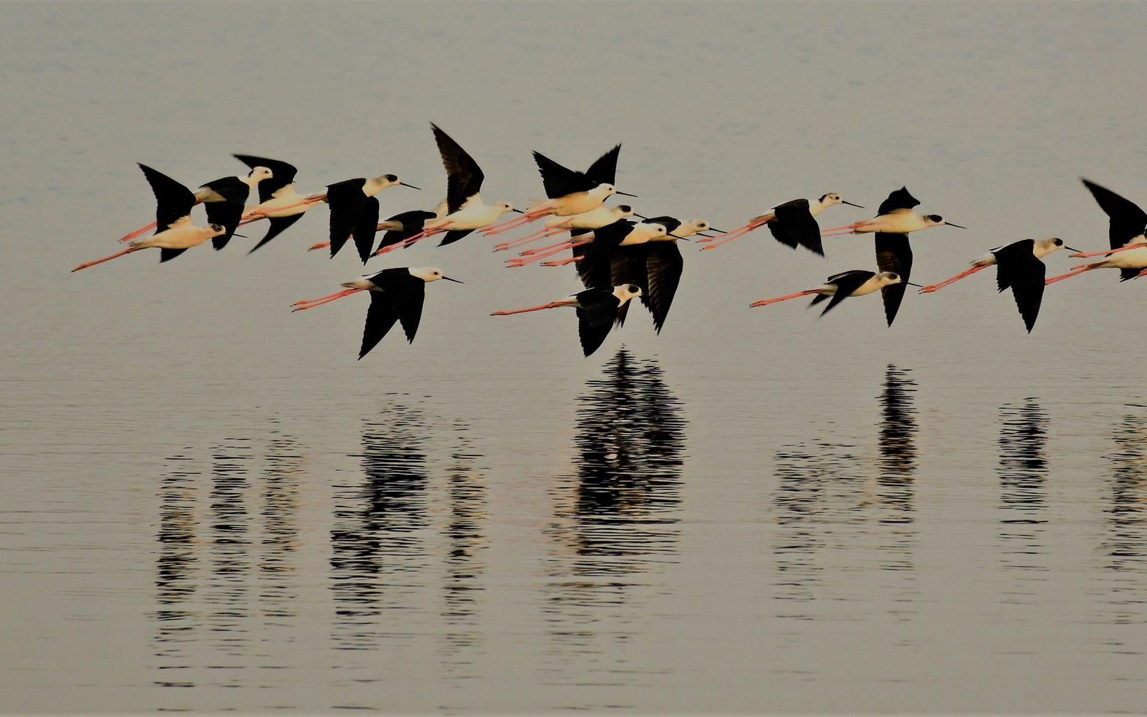 flying over Lake Sembakkam