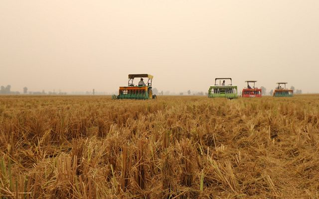 in the fields of Punjab, India.