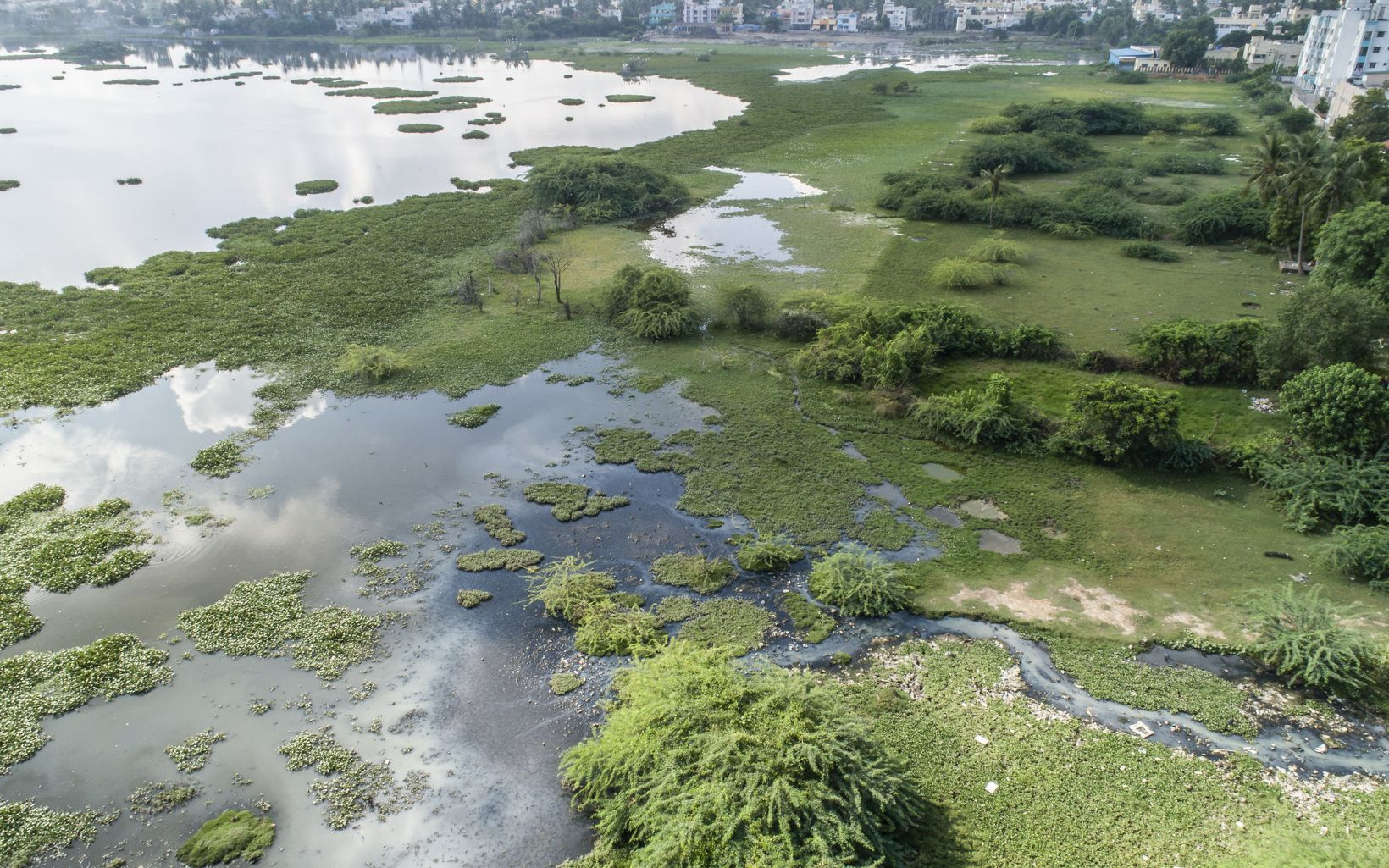 with accumulated silt, wastewater inlets flowing from near by houses, and invasive aquatic plants