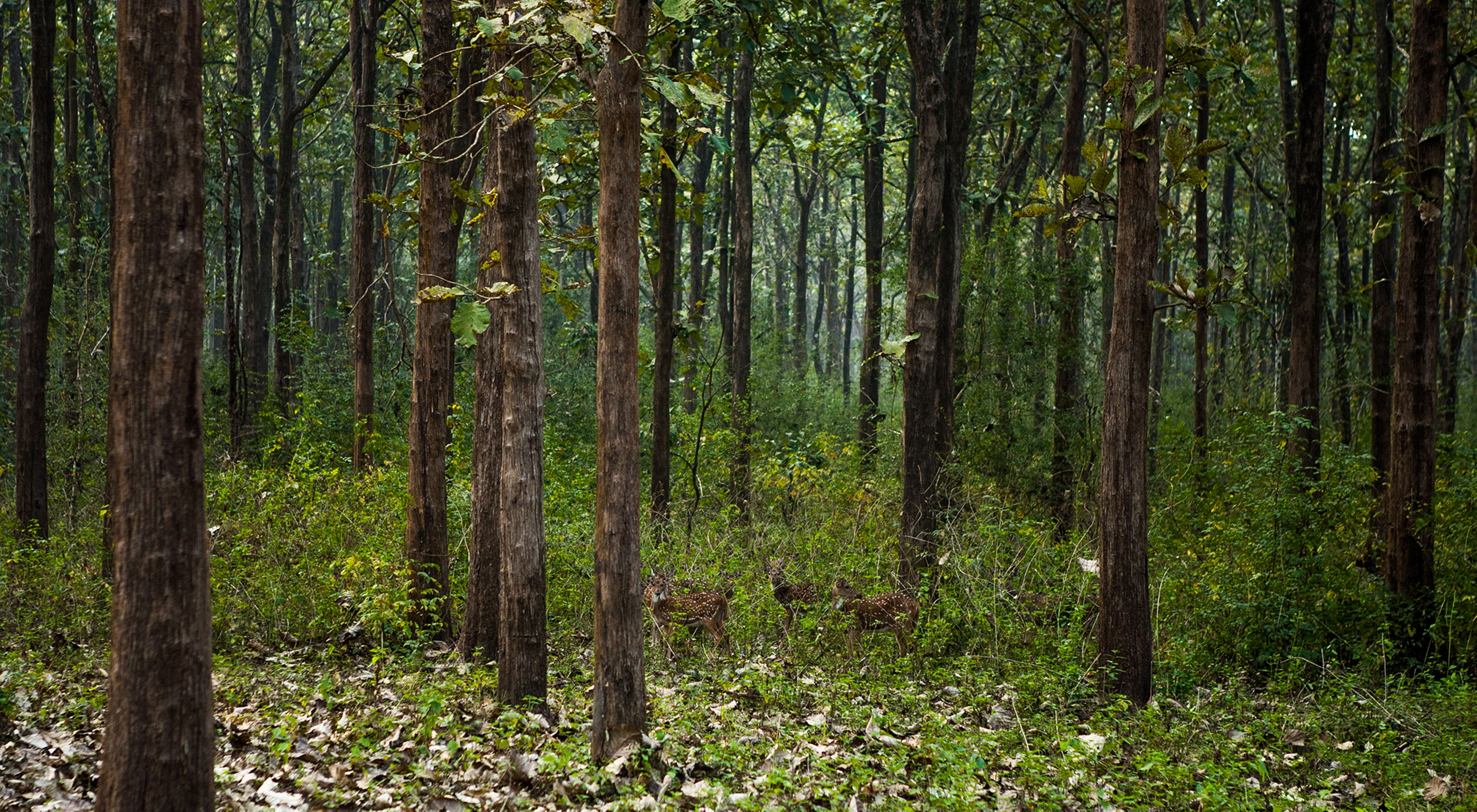 Nagarhole National Park, Coorg, India