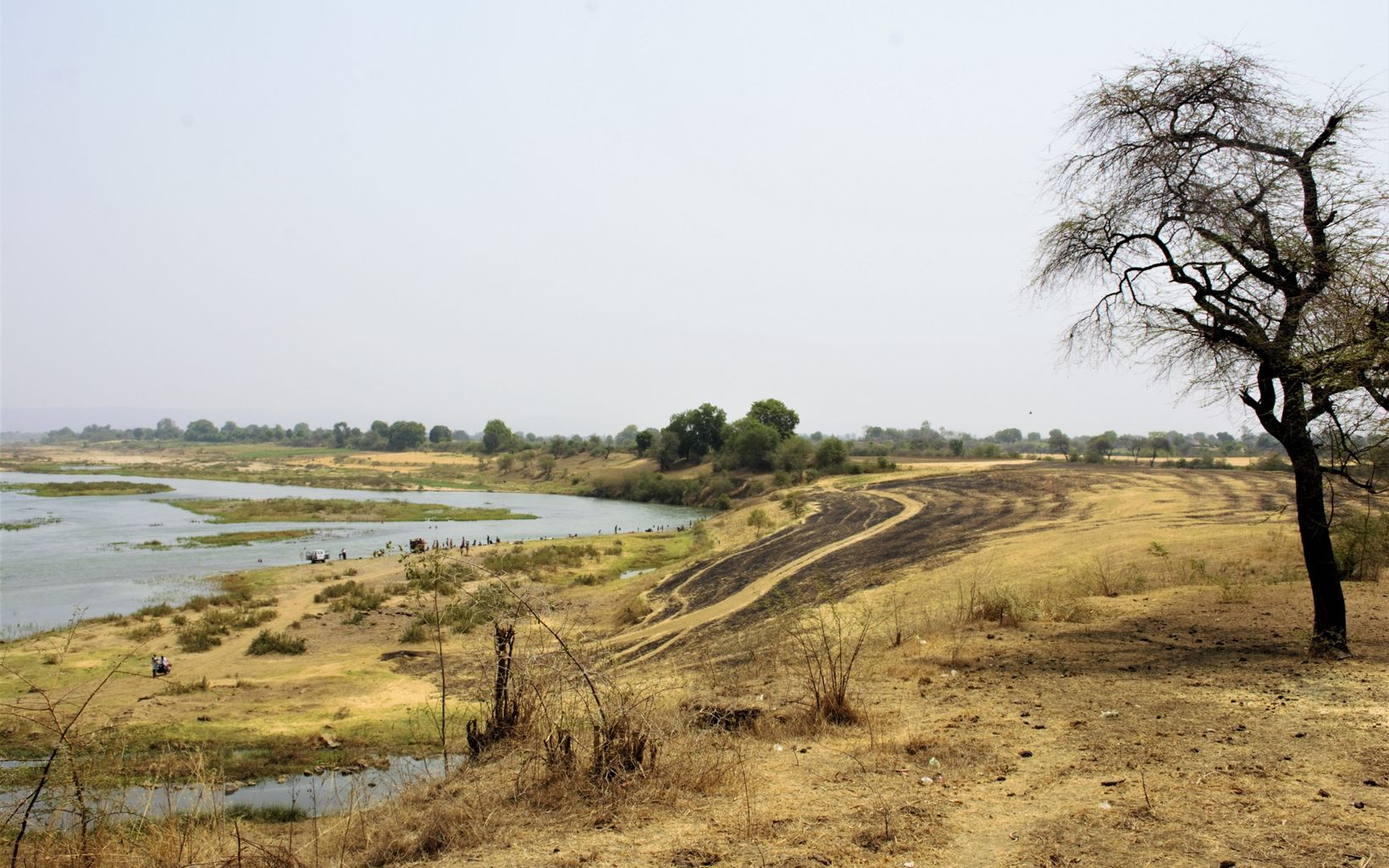 riverside banks converted to agricultural lands face the threat of crop residue burning
