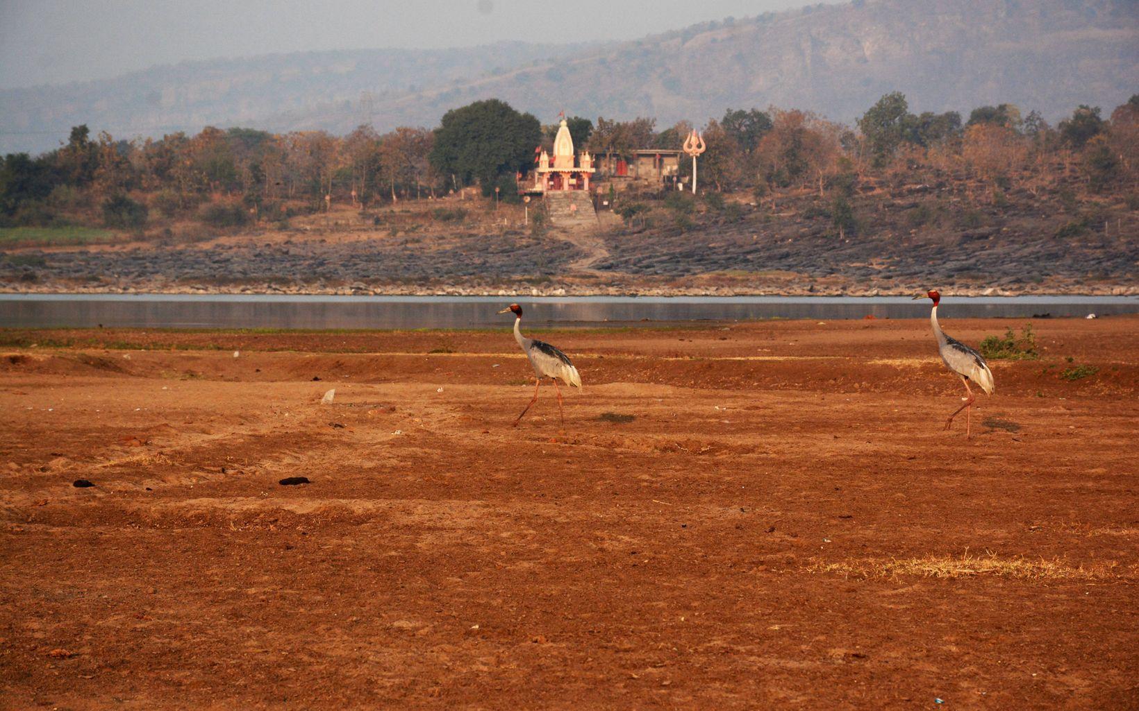 prancing on the banks of River Narmada