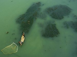 Indian fisherman fishing