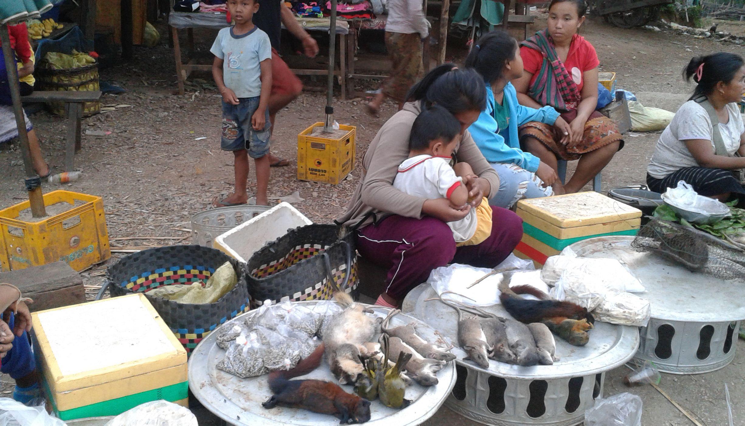 Wildlife meat market in Laos