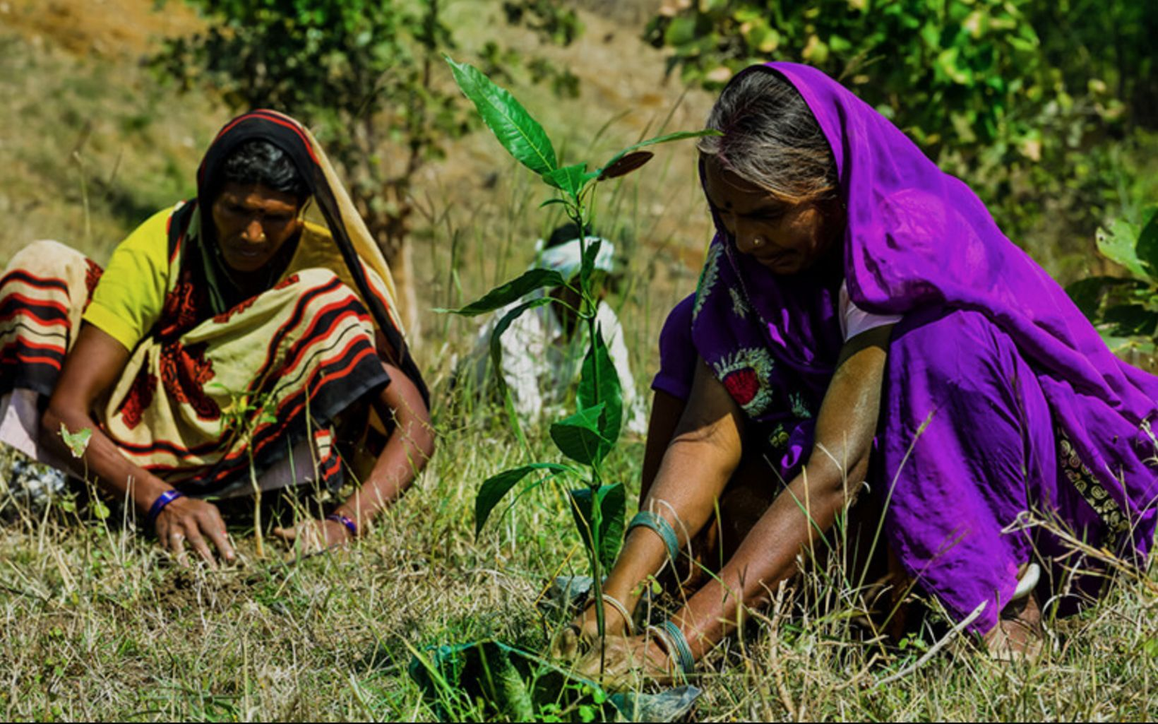 planting saplings on a land near River Narmada