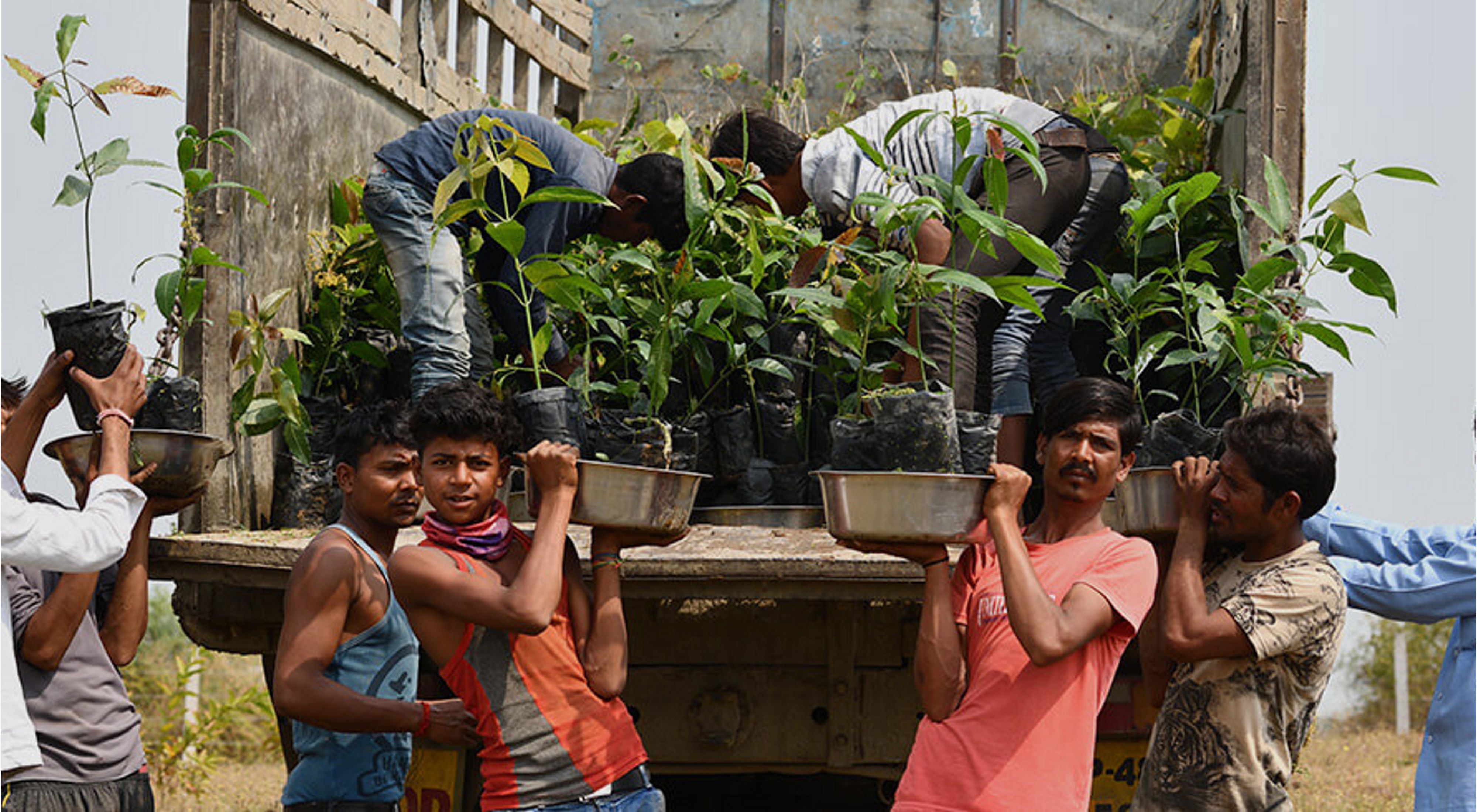 The Nature Conservancy is working with communities to improve 3 km of Narmada's riverbanks by planting and nurturing native plants.