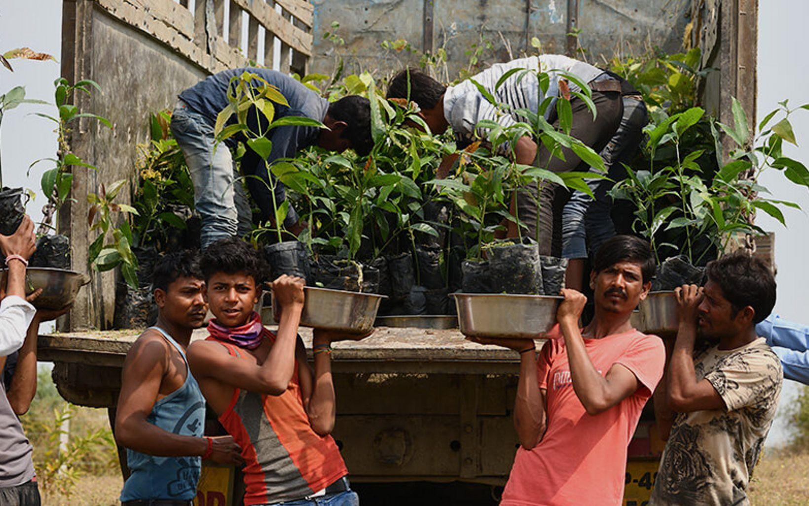 of Ajera, Madhya Pradesh to improve 3 km of Narmada's riverbanks by planting and nurturing native plants.