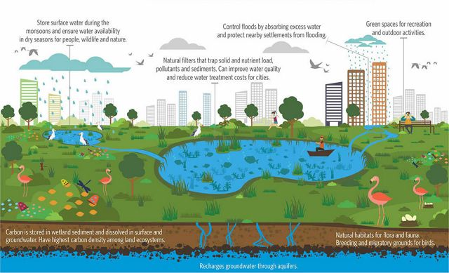 A wetland is any land area that can hold surface water and support aquatic flora and fauna. In urban spaces, wetlands occur as lakes, ponds, marshlands, and swamps.