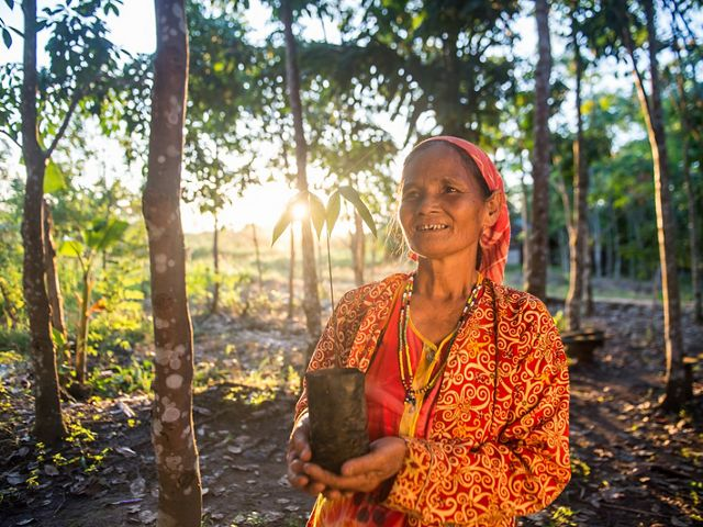 A woman holds a young tree to be planted in East Kalimantan, Indonesia.
