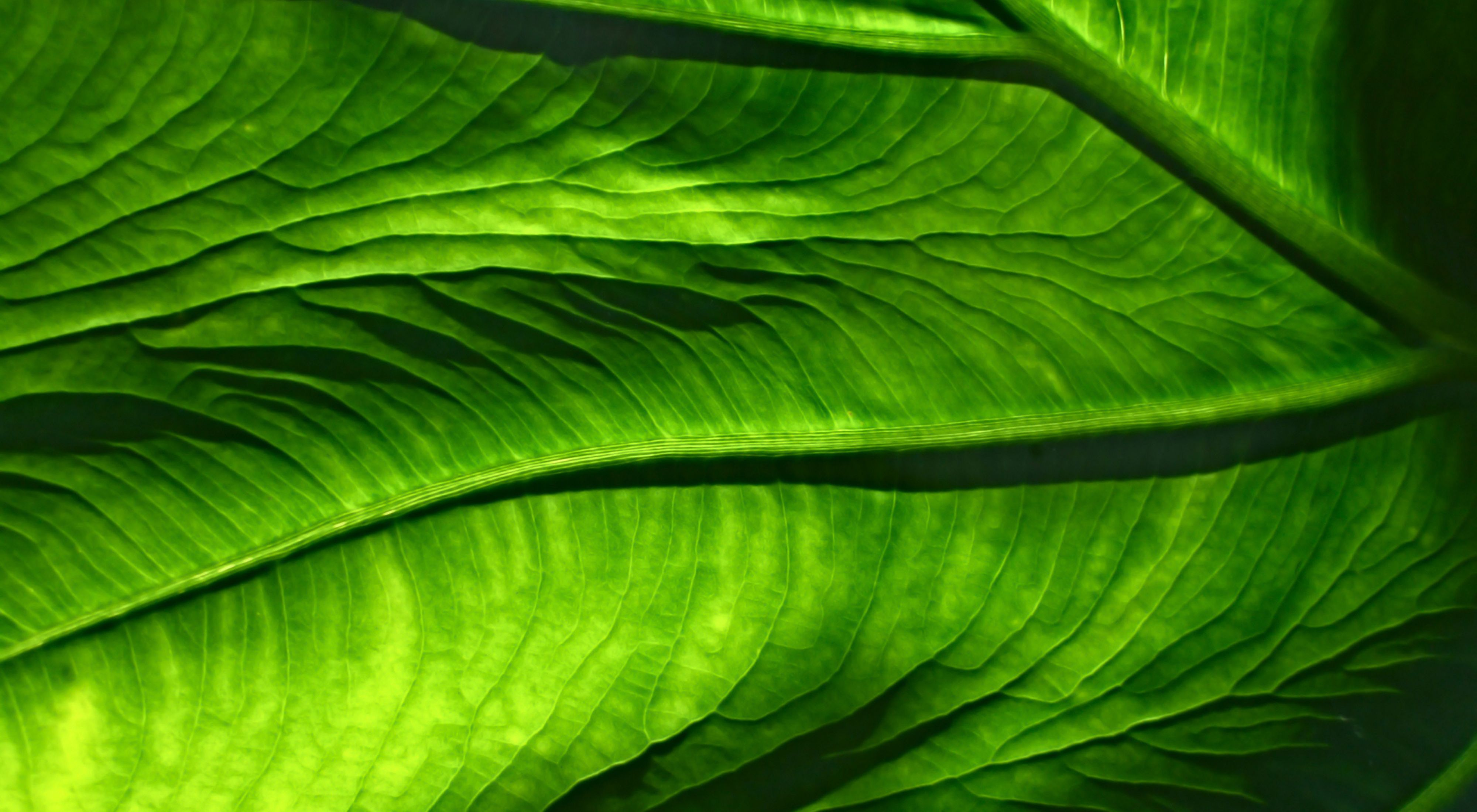 of a leaf.