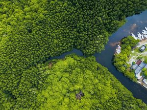 aerial view of a mangrove forest in indonesia