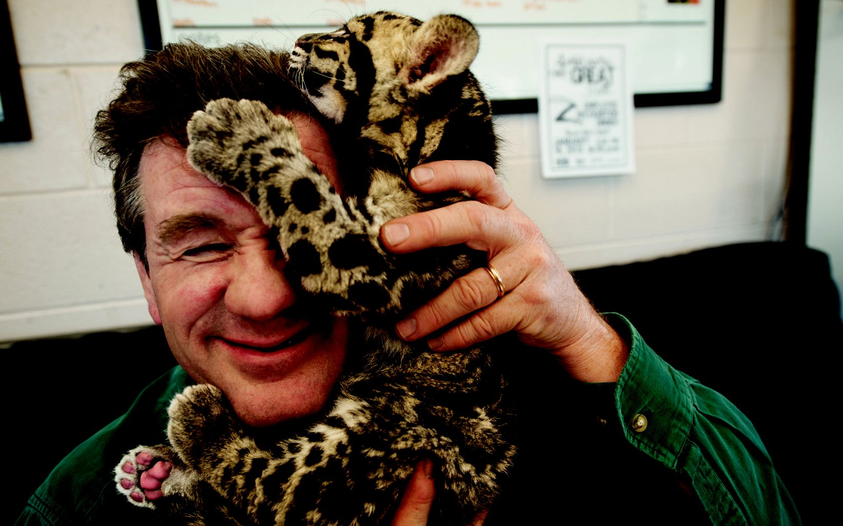 After a photo shoot at the Columbus Zoo in Ohio, a clouded leopard cub climbs on Sartore's head. Part of the National Geographic Photo Ark, natgeophotoark.org.