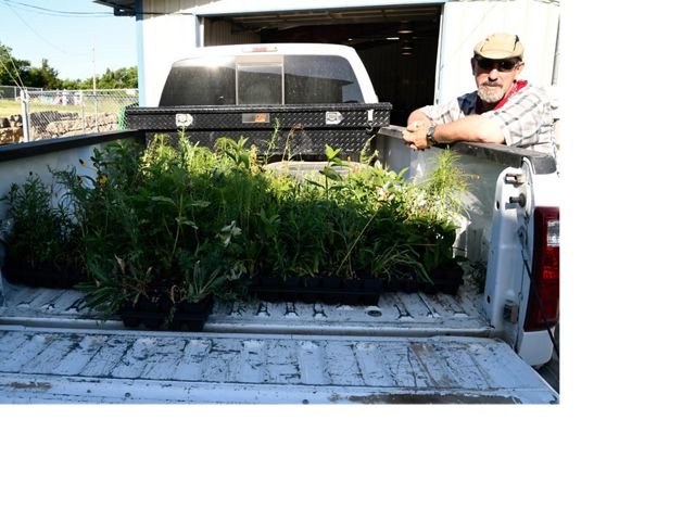 A volunteer loads the truck with wildflower seedlings to be planted in restoration plots at Tallgrass Prairie National Preserve.