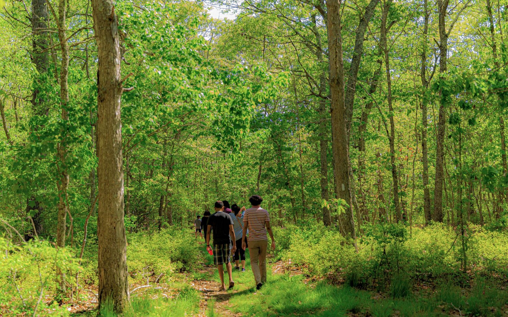 Hikers follow a wide, grassy lane through the forest.