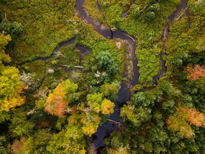 An aerial view of lush forest and streams.
