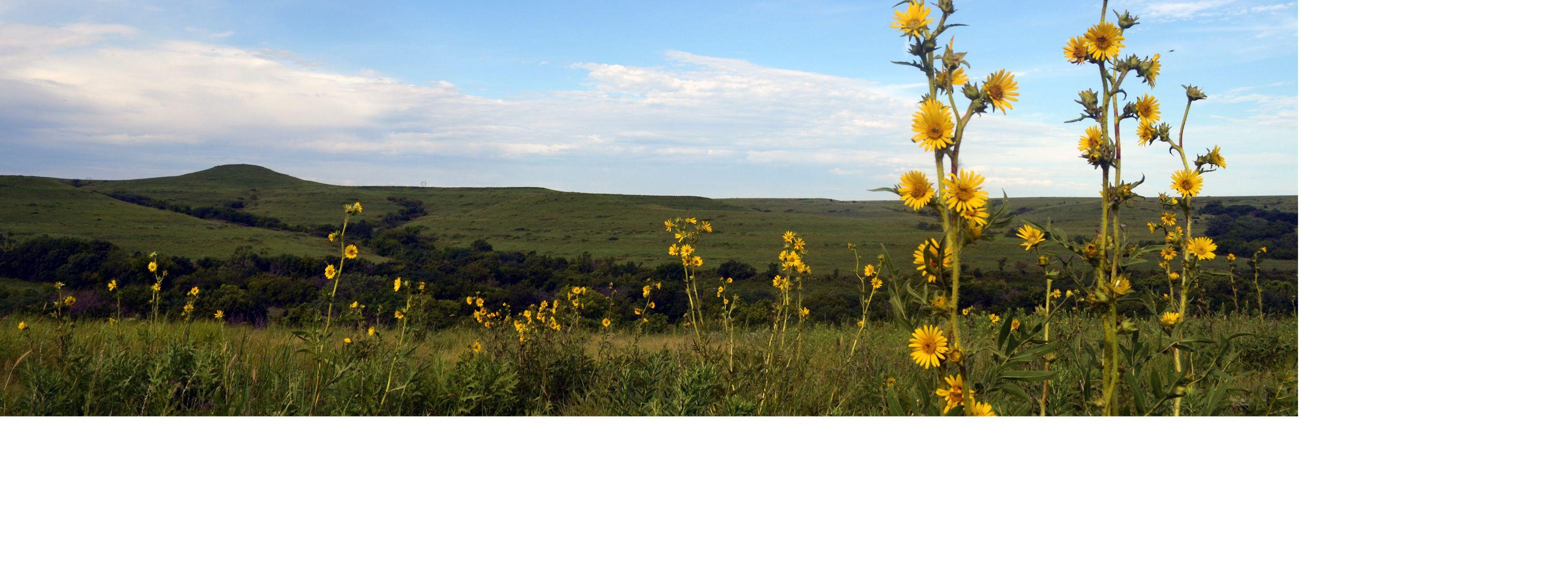 over tallgrass prairie as far as the eye can see.