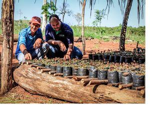 Restauración ecológica en Brasil