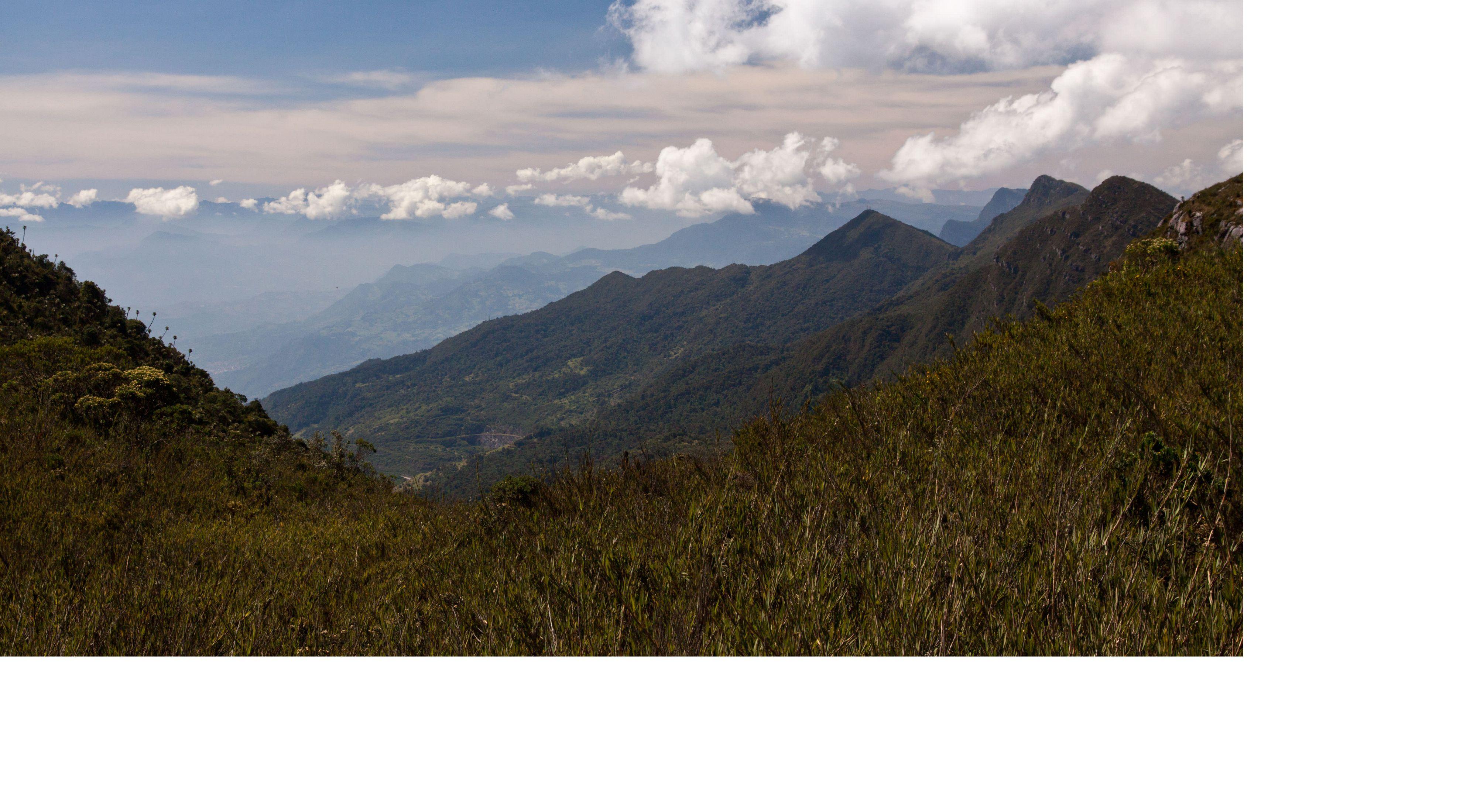 Páramo in Chingaza Parque Nacional al lado de  Bogota, Colombia.
