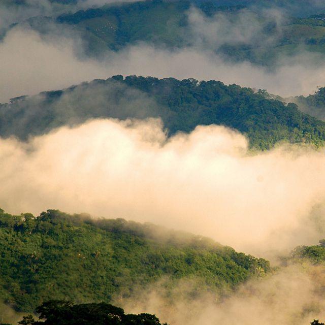 La vista del bosque seco tropical durante la temporada de lluvias en la Reserva Biológica Bosque Escondido es un refugio privado de vida silvestre en Costa Rica